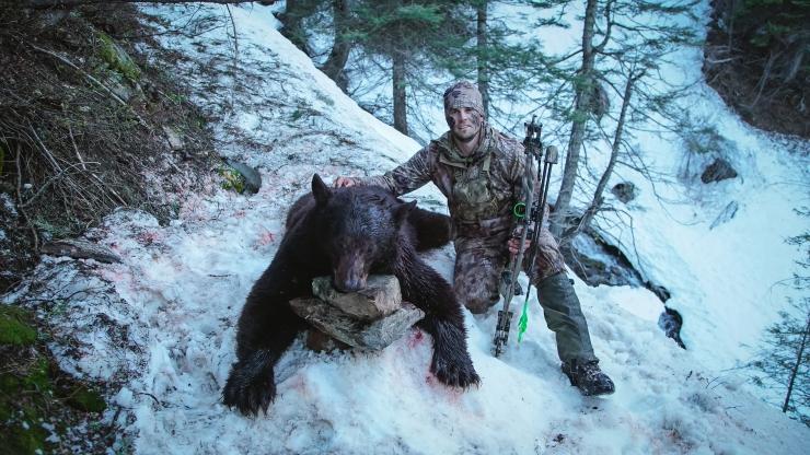 TP Bear SP17-8